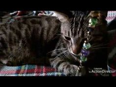 Cats and colorful pendulums!!