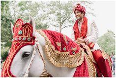Horse Indian Baraat