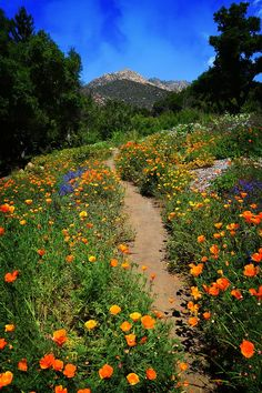 A lovely path in Santa Barbara Botanic Garden surround by a mix of spring wildflowers by Lynn Bauer Spring Aesthetic, Nature Aesthetic, Flower Aesthetic, Aesthetic Gif, Aesthetic Pictures, Aesthetic Wallpapers, Orange Aesthetic, Landscape Photography, Nature Photography