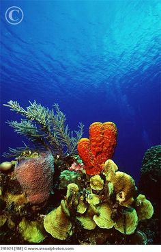 Coral Reef, Grand Cayman, Cayman Islands.  The marine life is unbelievably gorgeous in the Cayman Islands.