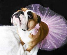 <3 my little fairy