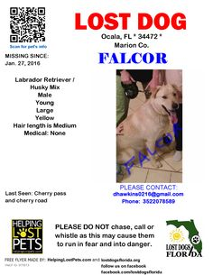 Lost Dog - Labrador Retriever - Ocala, FL, United States