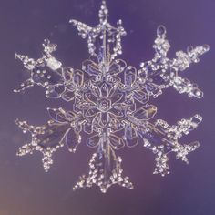 real snowflakes | Real Snow Flake Photography | Karla Jean Booth