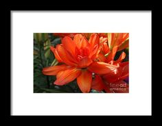 orange, flower, bloom, blossom, nature, garden, michiale, schneider, photography