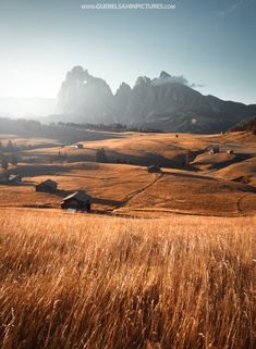 Fields of Gold (Dolomites, Italy) by guerel sahin on 500px