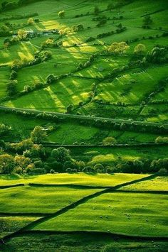unbelievable green, idyllic countryside, in spring in Derbyshire, England (E Midlands) • true green is not just Irish ; )