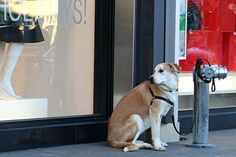 Don't leave your dog tied up and unattended.  A scared dog can run, bite, and get hit by a car.  It can get stolen or attacked by other animals.  Check out this article for alternatives to tying up.