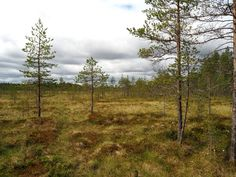 A view from the Seitseminen National Park in Finland.