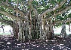 Misteri ghaib pohon angker beringin – Mughni Ali Abdillah