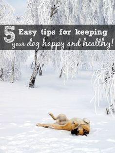 5 ways to keep a dog happy and healthy #BayerExpertCare #sponsored