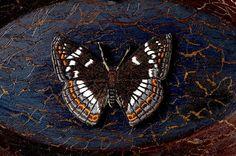 Textile Artist Ulla Pohjola Textile Fiber Art, Fibre Art, Textile Artists, Woods, Butterflies, Insects, Textiles, Animals, Animales