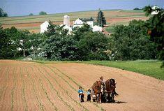 An Amish family works on a farm in Pennsylvania