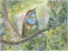 Купить Варакушка - варакушка, птица, лето, ветка дерева, акварель, картина, подарок, зелёный, акварель