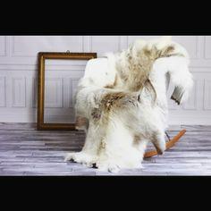 New beautiful reindeer hides in our shop again <3 #reindeerhide #sheepskin #interiorsdesign #interiorstyled #scandinavianstyle #scandinavianinspiration #cooperation #contactme #scandinavianblogger #scandinavianinterior