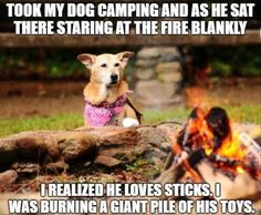 """""""Why are you burning those...?! Is this supposed to be fun??"""" Does your dog go camping?"""