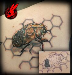 bc55e469085cb Cicada Husk Cover-up Tattoo by Jackie Rabbit by jackierabbit12 on ... Rabbit