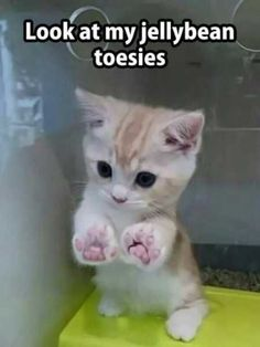 20 Adorable Kittens That Just Want To Make You Smile (Memes)