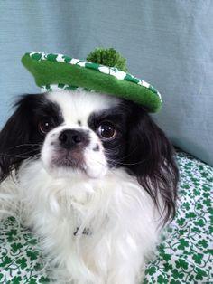 Shamrock St Patrick's Day Dog Hat, Various Sizes