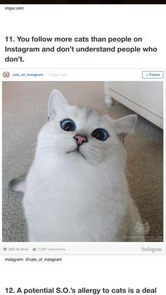 I want a cat