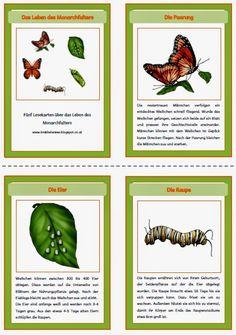 Die Bilder zur Entwicklung des Monarchfalters sind fertig.  Sie passen optisch zu den Figuren von Safari, weshalb ich noch extra Bilder an...