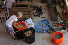 Mieux que le tuto de cuisine, le cours de graines potagères ! - Terra eco