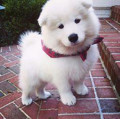 I want. I want. I want.