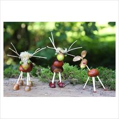 GAP Photos - Garden & Plant Picture Library - Autumn crafts - Animals made of matches, chestnuts and acorns - GAP Photos - Specialising in horticultural photography