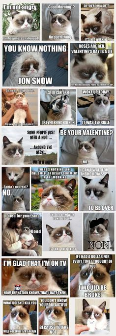 Grumpy Cat Compilation How much money does she make. - Grumpy Cat - Ideas of Grumpy Cat - Grumpy Cat Compilation How much money does she make. The post Grumpy Cat Compilation How much money does she make. appeared first on Cat Gig. Grumpy Cat Breed, Grump Cat, Grumpy Cat Quotes, Funny Grumpy Cat Memes, Cat Jokes, Funny Animal Jokes, Cute Funny Animals, Funny Cats, Funny Jokes