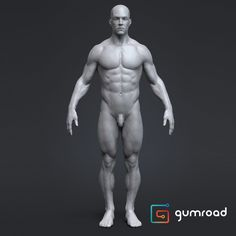 Anatomy Male Tool Reference for Artists ! , Pascal Ackermann on ArtStation at https://www.artstation.com/artwork/qPwNe