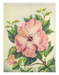 """Vintage 1940's """"Hibiscus"""" print by Ted Mundorff"""