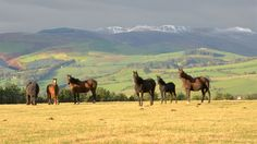 Horseback riding and trekking in Wales