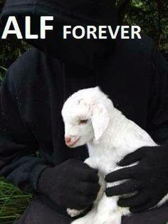 Empty Cages Worldwide's photo: How many hearts can we get for the ALF?