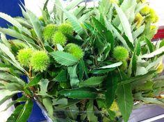 #Chesnut #Kastanje: Available at www.barendsen.nl