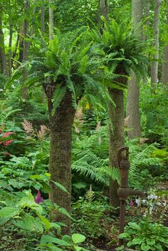 Create an exotic vertical accent with moss covered columns and top with Boston Ferns. Home made palm trees for the shade!