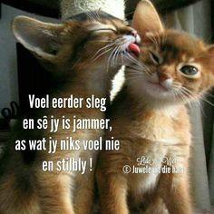 Love Story, Cute Animals, Afrikaans, Gatos, Pretty Animals, Cutest Animals, Cute Funny Animals, Adorable Animals
