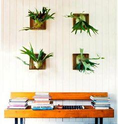 staghorn ferns in a grid