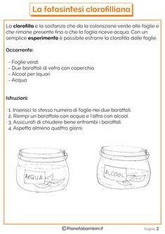 Schede-Didattiche-Fotosintesi-Clorofilliana-2.png (2480×3508)
