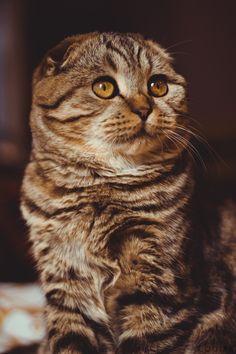 I LOOOOVE CATS ;-)))))))) #cute beautiful fluffy kitty cat big eyes
