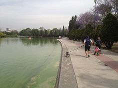 Lago de Chapultepec #endondecorrer