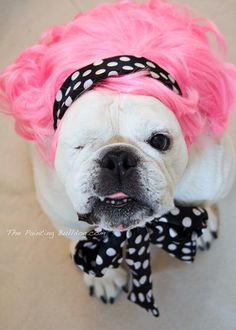 Pink Haired and Adorable English Bulldog  by PiperStoneArtwork, $8.00