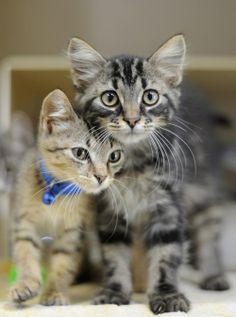 Mother cats are ferocious if their kittens are in danger