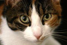 super-Karla, my lovely cat...
