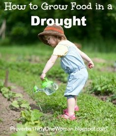 Drought Gardening - How to Grow Food in a Drought | Proverbs 31 Woman
