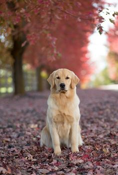 Butter in the Fall by Brian Whipple on 500px
