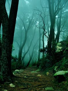 The Mystic Forest, Sintra, Portugal  (by aribix)