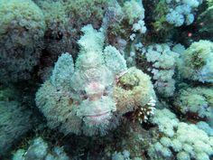 #rockfish #rock Fish #dive Center #maldives #thailand #scuba diving (scheduled via http://www.tailwindapp.com?utm_source=pinterest&utm_medium=twpin&utm_content=post13044662&utm_campaign=scheduler_attribution)