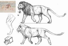 drawing Illustration art lions art inspiration lioness art reference art tutorial Animal Anatomy character design reference art lesson anatomy for artists Kuhnert Wilhelm Jonathan Kuo how to daw animal anatomy reference Lion Anatomy, Animal Anatomy, Anatomy Drawing, Anatomy Male, Human Anatomy, Animal Sketches, Animal Drawings, Anatomy Reference, Art Reference