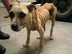 harsher penalties for animal abusers