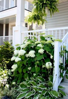 Landscaping With Hostas And Hydrangeas