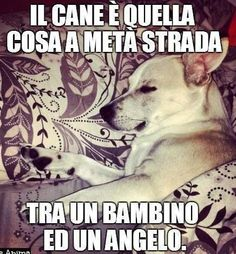 Il cane e' quella cosa a meta' strada tra un bambino ed un angelo.